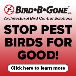 https://www.birdbgone.com