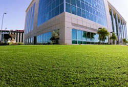Artificial grass in front of a tall white office building.