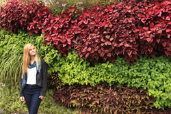 Living wall with a variety of plants