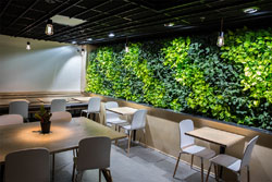 Living wall inside a coffee shop
