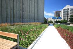 Perennial vegetative roof