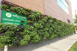 Living wall - Whole Foods