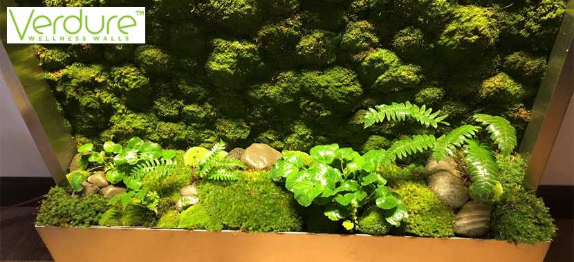 LIVE Moss Wellness Walls